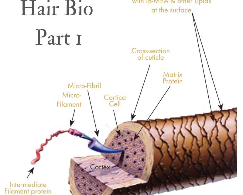 Hair Care Bio Part 1